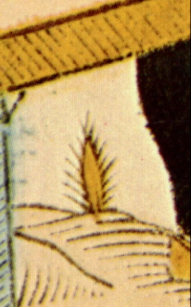 Lebateleurcactushéron